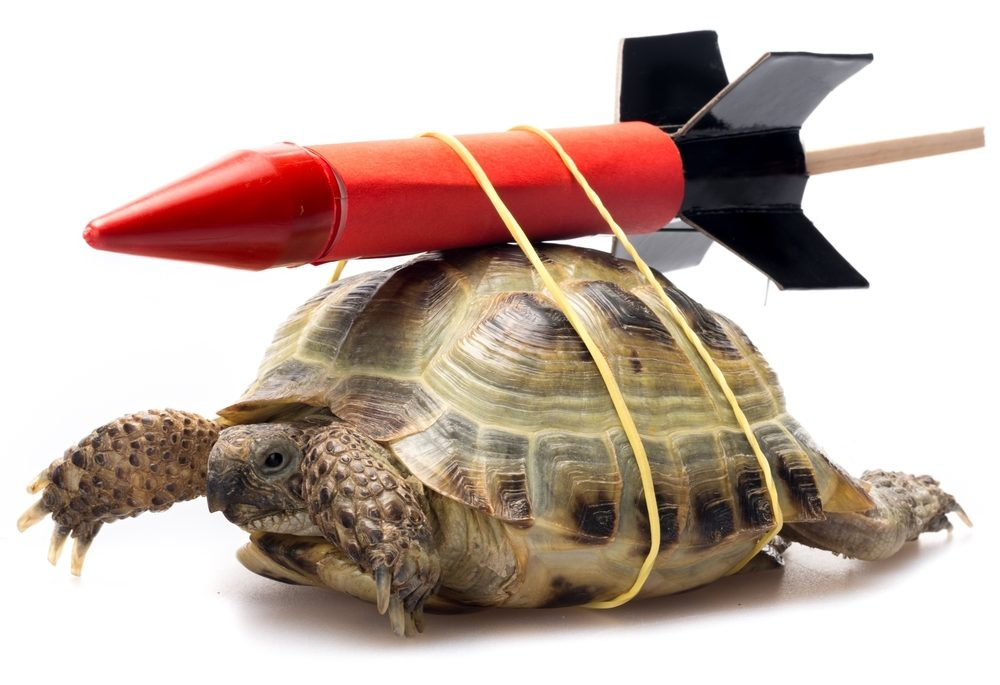 A turtle with a rocket attached to it's back.